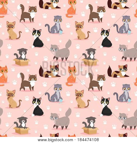 Cat breed cute kitten pet portrait fluffy young adorable cartoon animal and pretty fun play feline sitting mammal domestic kitty vector illustration. Beautiful posing playful paw seamless pattern.