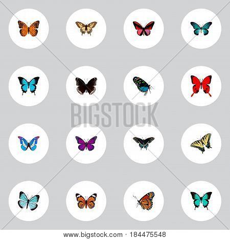 Realistic Papilio Ulysses, Copper, Checkerspot And Other Vector Elements. Set Of Beautiful Realistic Symbols Also Includes Brown, Orange, Cynosura Objects.