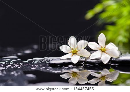 Still life with two gardenia and bamboo with therapy stones