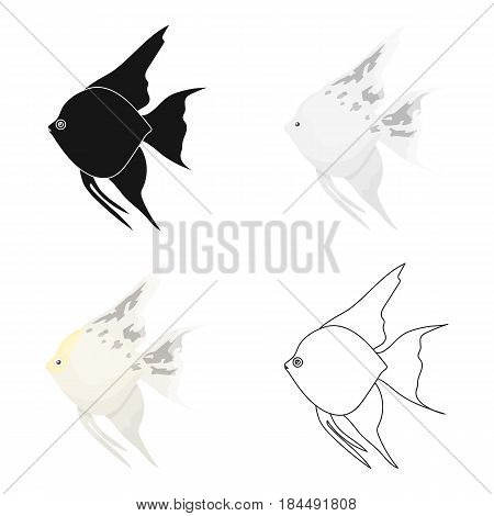 Angelfish common fish icon cartoon. Singe aquarium fish icon from the sea, ocean life cartoon.