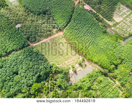 Banana And Durian Trees Orchard And Rubber Trees Plantation