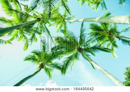Retro effect tropical plams towering overhead blue and green tones.