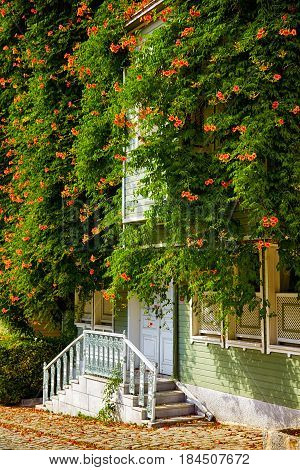 The House Wreathed With Campsis Creeper On The Street Of The Cold Fountain.