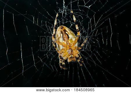 High contrast image of very dreadful spider on his net in night darkness.