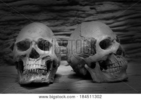 Still Life Fine Art Photography On Human Skeleton On Wood Log Background. Black And White Photograph