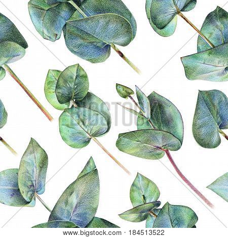 Seamless floral pattern with green eucalyptus on white. Spring plants. Botanical natural background drawn by hand with colored pencil