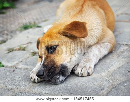 Homeless little puppy gnawing a bone outdoors