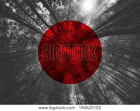 Flag Of Japan With Bamboo