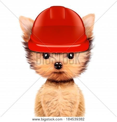 Funny dog in red hard hat Isolated on white background. Concepts for web banners, web sites. Fixing computer and repair center concept with cute dog. 3D illustration with clipping path