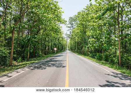 Teak Forests On The Rural Road With Environment Green Leaves