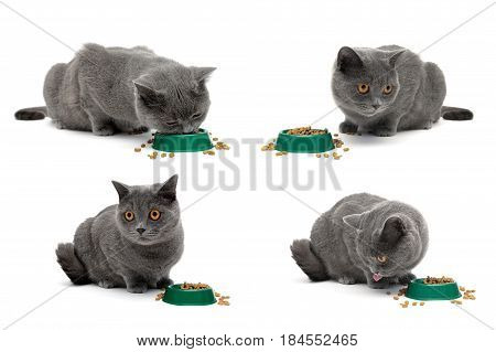 gray cat sits beside a bowl of food on a white background. horizontal photo.