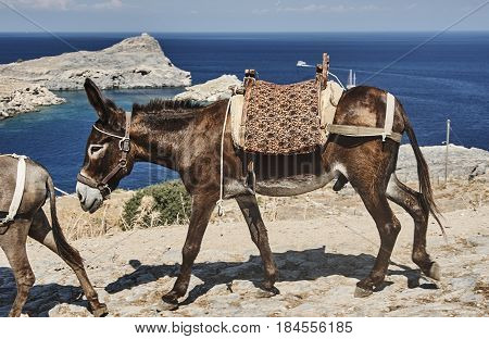 donkey on the street of the town of Lindos on Rhodes Island