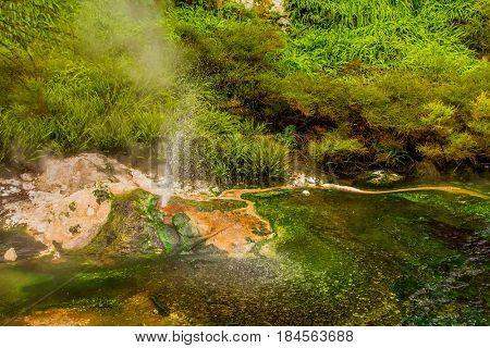 geothermal valley waimangu near rotorua, new zealand poster