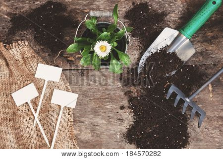 Garden tool, shovel, rake, watering can, bucket, tablets for plants, flower daisy in a flowerpot on a wooden old brown table with scattered soil, close-up. Concept of gardening.