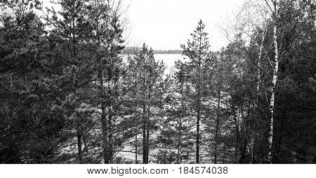 Lake view in bog black and white