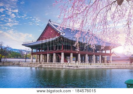 Gyeongbokgung palace in spring and cherry blossom South Korea.