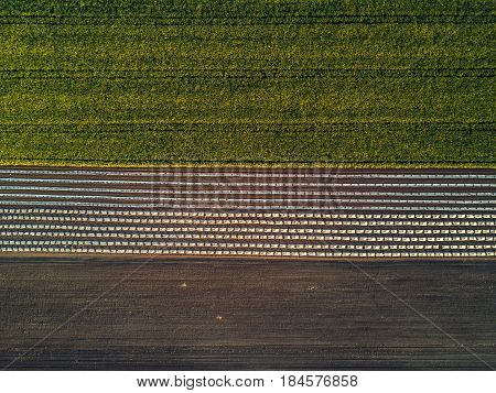 Aerial view of cultivated field from drone oilseed rapeseed plantation from above