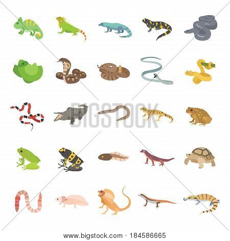 25 Reptiles & Amphibians color vector icons