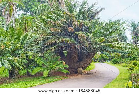 The Cycads Collection