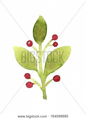 Green branch with red berries. Watercolor illustration
