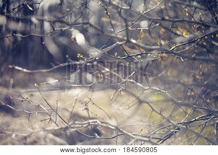 Abstract blurred background with branches of hawthorn in spring.