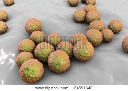 Bacteria Enterococcus, 3D illustration. Gram-positive cocci which cause infant endocarditis and other infections