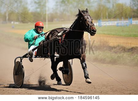 Orel Russia - April 30 2017: Harness racing. Brown horse running fast with a sulky in sunny day