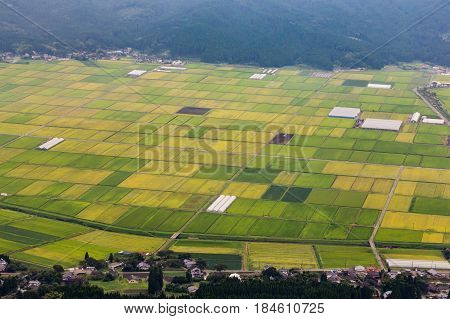 Green Rice Field In Aso Village In Kumamoto, Japan