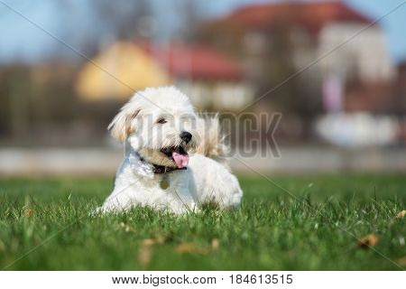 adorable mixed breed dog lying down on grass