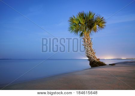 A lonely palm tree, relaxing on a beach in Fort Walton Beach, Florida.