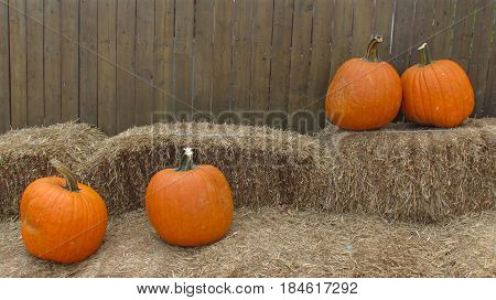 A pumpkin pair fights and makes up in a patch
