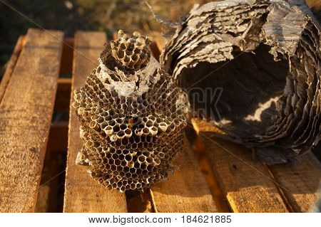 Beautiful aspen hive on a wooden background