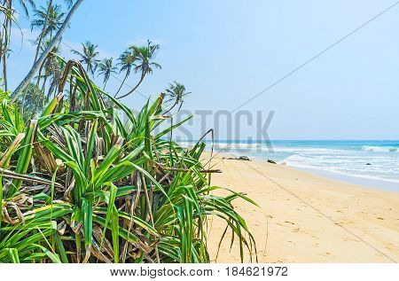 The beach of Boosa is separated from Colombo-Galle Road with the belt of lush tropic greenery Sri Lanka. poster