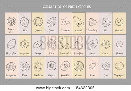 Hand drawn healthy fruits table concept with natural exotic and tropical products isolated vector illustration