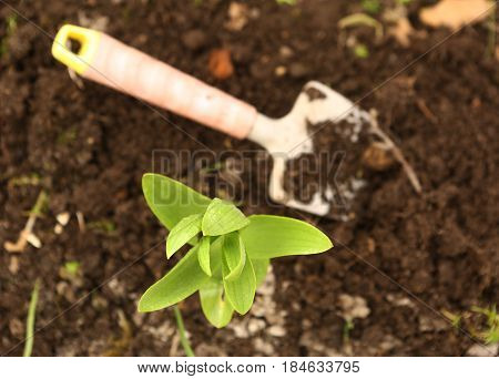 spring seedbed  with shovel plant sprouts close up photo
