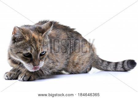 Studio Shot Of An Adorable Tabby Cat