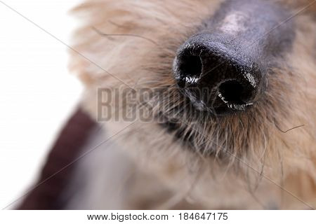 Close Shot Of An Adorable Yorkshire Terrier's Nose