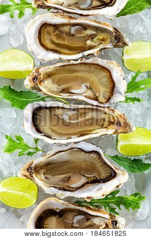 Fresh oysters on ice with pieces of lime view from above