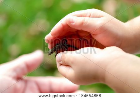 A Child Playing With A Little Animal