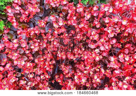 Background Of Red Plants