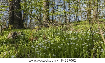 Spring nice flower meadow in sunny north Bohemia