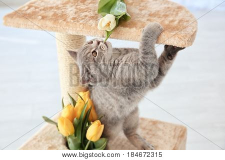 Cute cat playing on claw sharpener with bouquet of flowers
