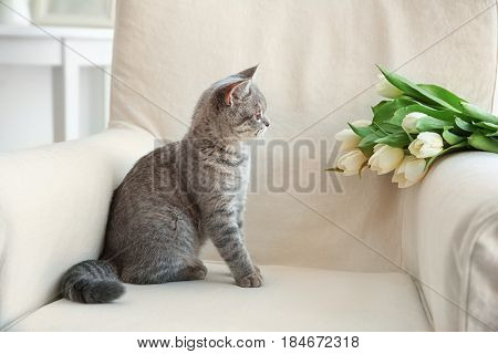 Cute cat sitting in armchair with flowers