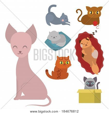 Cute cats character different pose funny animal domestic kitten vector illustration. Pet feline portrait fluffy young adorable mammal whisker pussy cartoon small kitty.