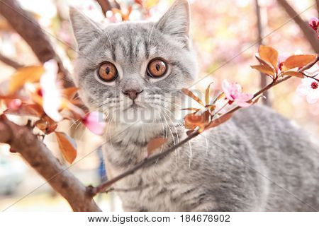 Cute cat on blossoming tree outdoors