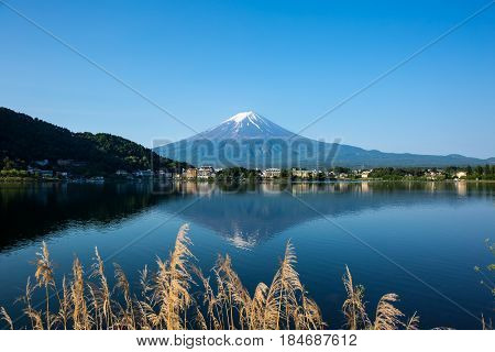 Mount Fuji at Kawaguchiko lake in summer morning.