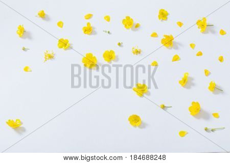 the yellow buttercups on a white background