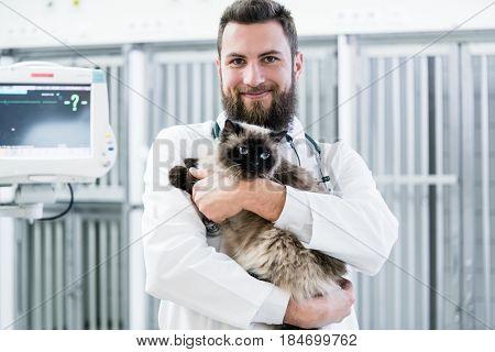 Veterinarian pet doctor holding cat patient in his animal clinic