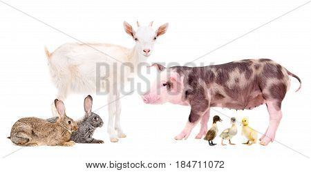 Group of farm animals isolated on white background