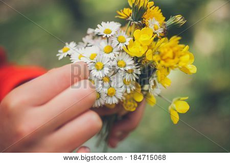 Bouquet of flowers. Springtime background. Bouquet of daisies. Macro view of beautiful white daisies flowers. Bunch of flowers. Chamomile flower. Spring flowers.